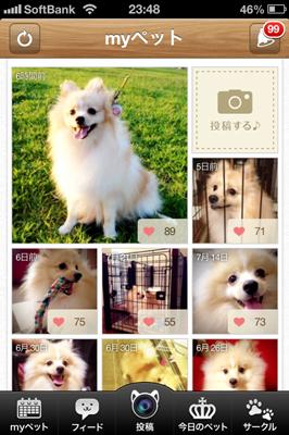 dog_photo2