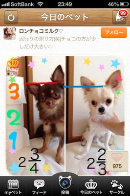 dog_photo3