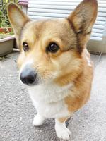 dog1.png